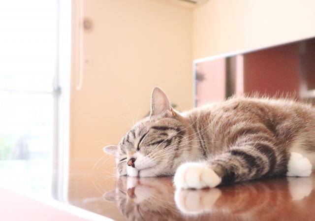 動物の睡眠時間